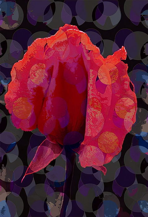 Tea Rose 3b (digitale) da Scott J. Davis