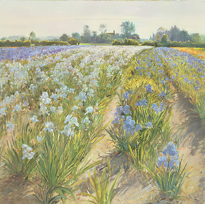 Iridi blu e bianche, Wortham da Timothy Easton